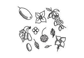 Flores preto e branco de Dogwood e vetores de sementes
