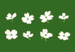 Vetor livre de flores de dogwood