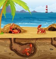 buraco de animal subterrâneo com muitos caranguejos vetor