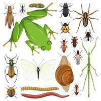 conjunto de diferentes insetos em fundo branco vetor