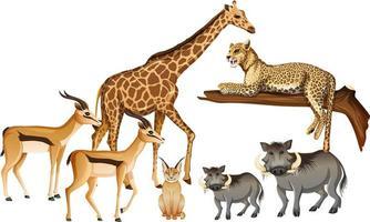 grupo de animal selvagem africano em fundo branco vetor