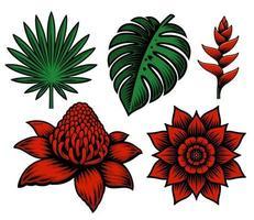 um conjunto de flores e plantas tropicais