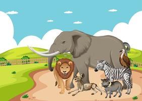 grupo de animal africano selvagem na cena da floresta