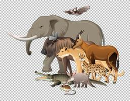 grupo de animais selvagens africanos em fundo transparente