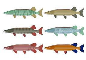 Coleção de vetores de peixes de muskie