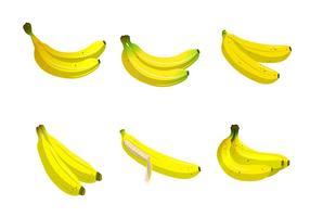 Coleção de vetores Plaintain Banana Fruit