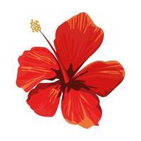 flor de hibisco de desenho animado vetor
