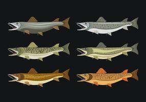 Coleção de ilustração vetorial de peixes de muskie vetor