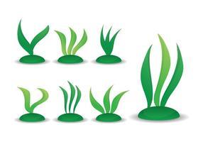 Conjunto de vetores de algas marinhas