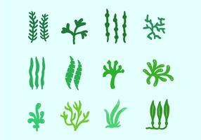 Plantas do mar e algas marinhas vetor