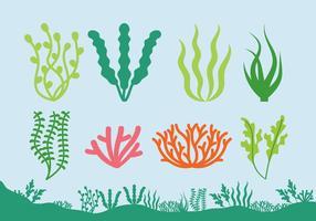 Ícones das plantas do mar vetor