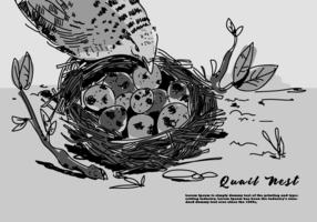 Ovo de codorna no ninho Ilustração desenhada mão do vetor