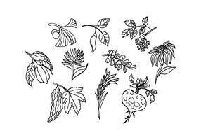 ícone de ervas grátis vetor de esboço