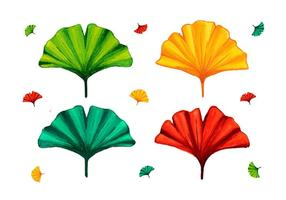 Folha de Ginkgo de cores diferentes vetor