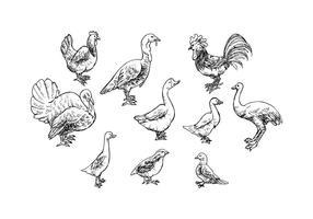 Vector de ícones de esboço de aves de capoeira grátis