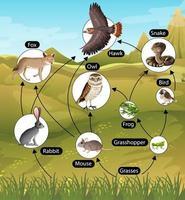pôster educacional de biologia para diagrama de cadeias alimentares vetor