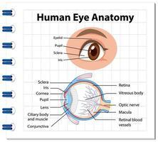 diagrama da anatomia do olho humano com etiqueta