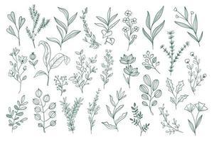 conjunto de rabiscos florais desenhados à mão vetor