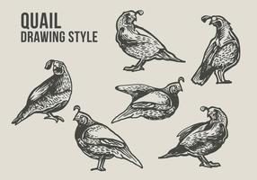 Ilustração de desenho de pássaro de codorna vetor