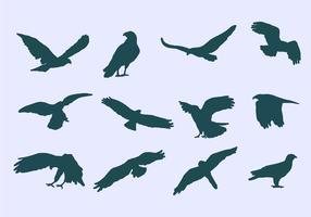 Ícones da águia Buzzard