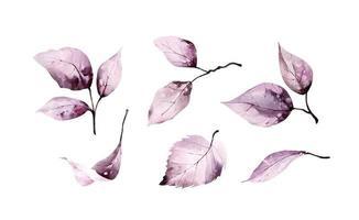 folhas rosa aquarela vetor