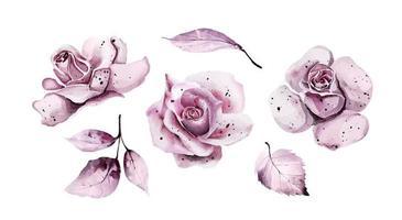 flores em aquarela rosa com folhas vetor
