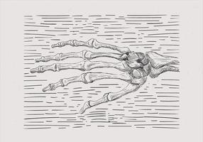 Ilustração de mão de esqueleto desenhada mão livre vetor