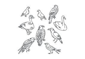 Desenhos de pássaros botânicos vetor
