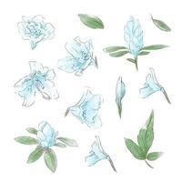 conjunto de flores e folhas delicadas em aquarela