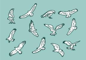 Ícones do vetor da águia Buzzard