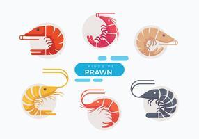 Ilustração plana do vetor do camarão fresco