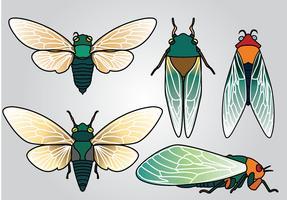 Pacote Vector Vector da Cicada