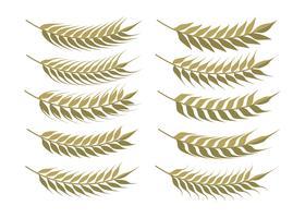 Conjunto de orelhas de trigo vetor