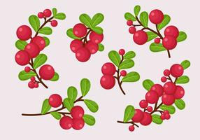 Cranberries Galho Com Folhas vetor