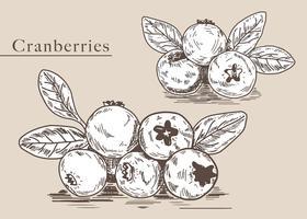 Cranberries mão desenhada vetor ilustração