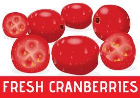 Cranberries frescos realistas vetor