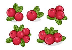 Cranberries Vermelhos Com Folhas vetor