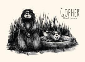 Gopher desenhado à mão vetor