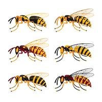 Coleção do vetor dos zangões da abelha
