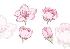 Vetores de flores de ameixa desenhadas à mão