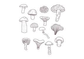 Desenhos Botânicos de Cogumelos vetor