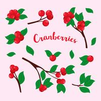 vetor de cranberries