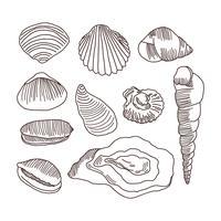 Doodles detalhados de conchas vetor
