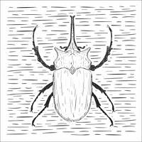 Ilustração desenhada mão do besouro do vetor desenhado mão