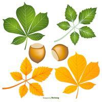 Folhas e nozes de Buckeye vetor