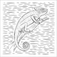 Ilustração desenhada mão do camaleão do vetor desenhado mão