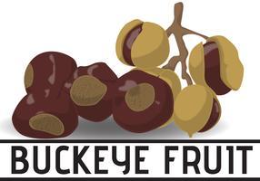 Cartoon Of Buckeye Fruit vetor