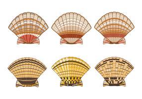 Conjunto de Ilustração de Shell de Scallops Isolado no Fundo Branco vetor