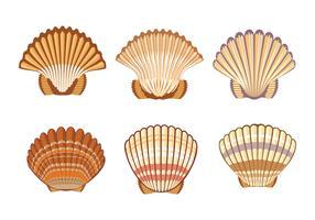 Conjunto de ilustração de concha de vieiras no fundo branco vetor