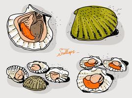 Ilustração vetorial desenhada à mão Scallops Fresco vetor